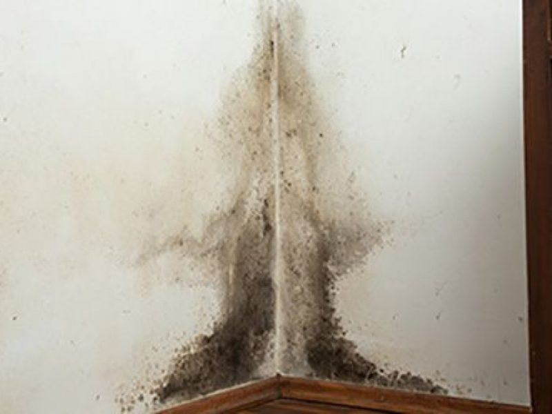 Restauration après sinistre : eau, feu, vent, vandalisme, contamination